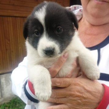 Абигейл - Собаки в добрые руки