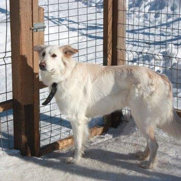 Снежа - Собаки в добрые руки