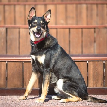 Брайтон - Собаки в добрые руки