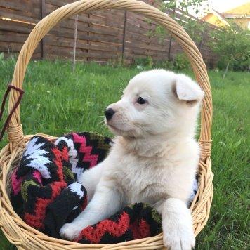 Cнежинка - Собаки в добрые руки