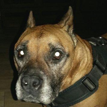 Леон (Лёня) - Собаки в добрые руки