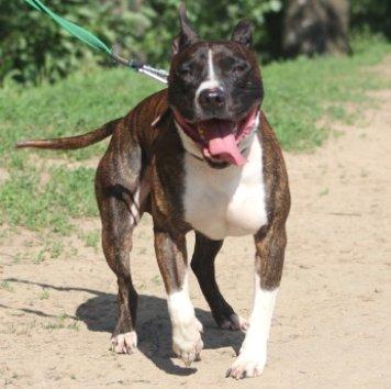 Лагрей - Собаки в добрые руки