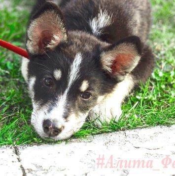 Алита - Собаки в добрые руки