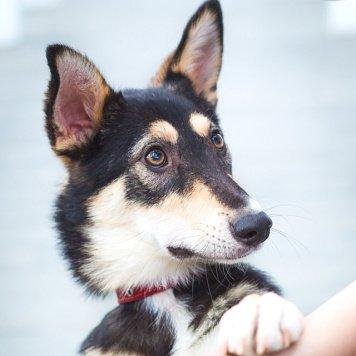 Клюква - Собаки в добрые руки