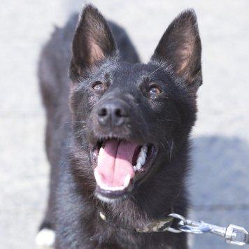 Ежевика - Собаки в добрые руки