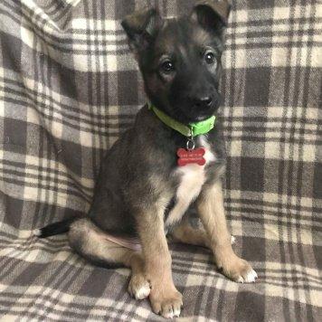 Потап - щенок - Собаки в добрые руки