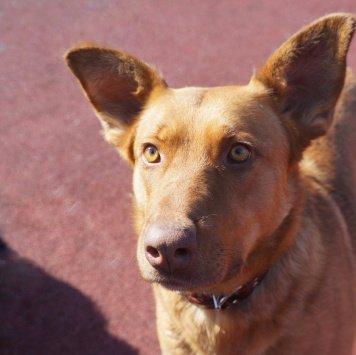 Карамболина - Собаки в добрые руки