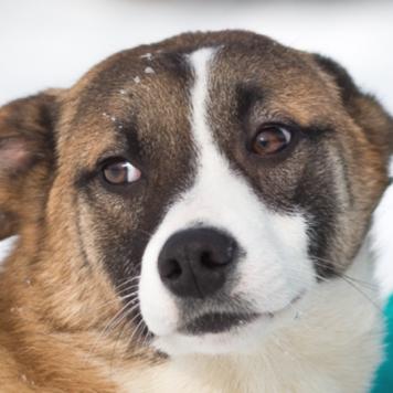 Нэрив - Собаки в добрые руки