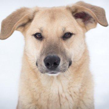 Феррано (Лис) - Собаки в добрые руки