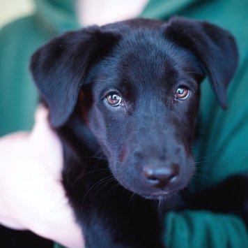Магда - Собаки в добрые руки