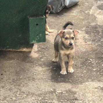 Щенки - Найденные собаки