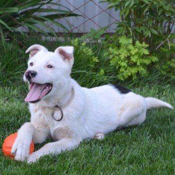 Ветерок - Собаки в добрые руки