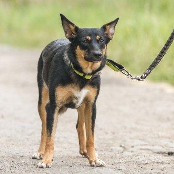 Охра - Собаки в добрые руки