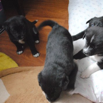 Хиппо и Багратион - Собаки в добрые руки