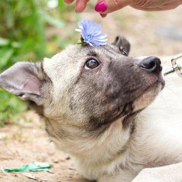 Тимми - Собаки в добрые руки