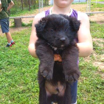 Рональдо - Собаки в добрые руки