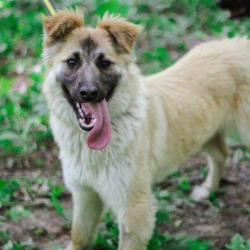 Вита - Найденные собаки