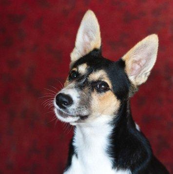 Фрида - Собаки в добрые руки