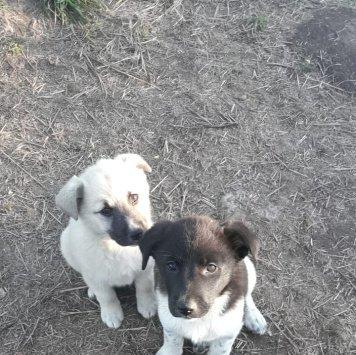 неизвестно - Собаки в добрые руки