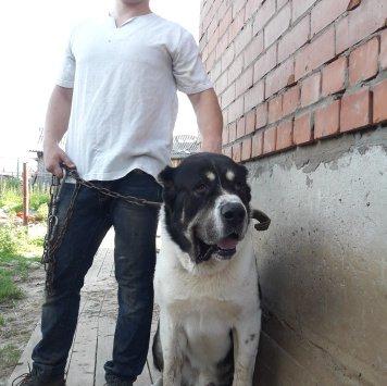 Шер - Собаки в добрые руки