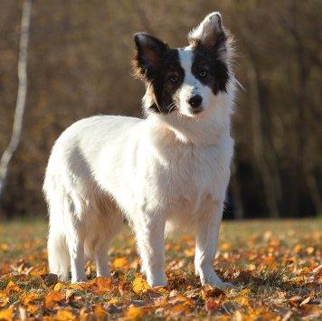 Лайза - Собаки в добрые руки