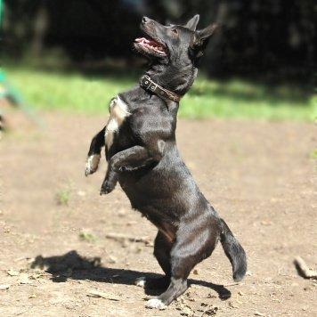 Бафка - Собаки в добрые руки