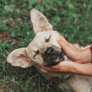 Илай - Собаки в добрые руки