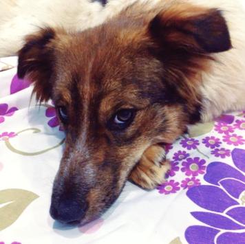 Красавица - Собаки в добрые руки