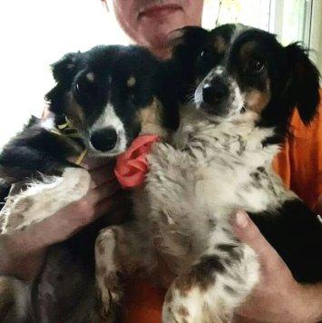 Ива и Ява - Собаки в добрые руки