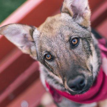 Пэппи - Собаки в добрые руки