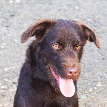 Наоми - Собаки в добрые руки