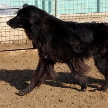 Эммануил - Собаки в добрые руки