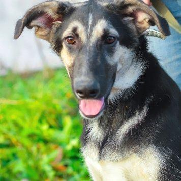 Пелагея - Собаки в добрые руки