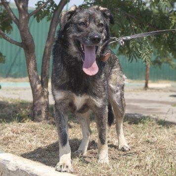 Мерседес - Собаки в добрые руки