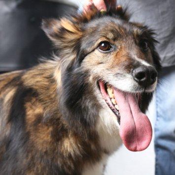 Клайд - Собаки в добрые руки