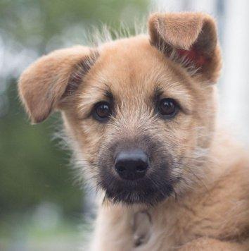 Шанти - Собаки в добрые руки