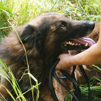 Рекс в поисках хозяина - Собаки в добрые руки