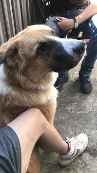 Эра - Собаки в добрые руки
