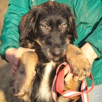 Аврора - Собаки в добрые руки