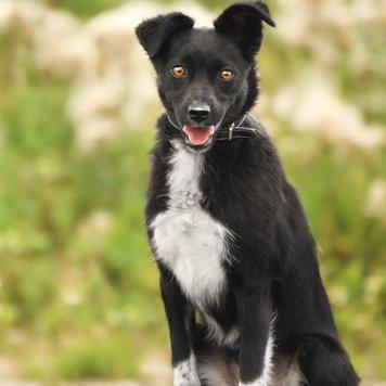 Елочка - Собаки в добрые руки