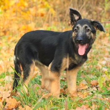Фартуна - Собаки в добрые руки