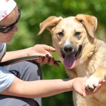 Лямис - Собаки в добрые руки
