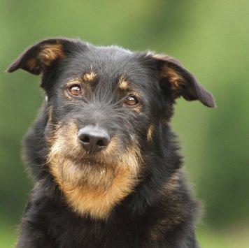 Галина - Собаки в добрые руки