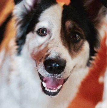 Йода - Собаки в добрые руки