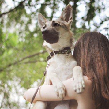 Эльфа - Собаки в добрые руки