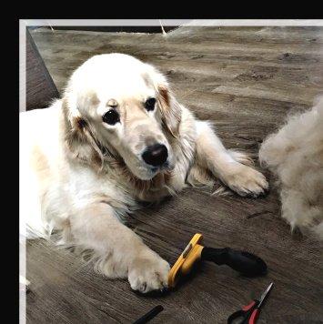 Амата - Собаки в добрые руки