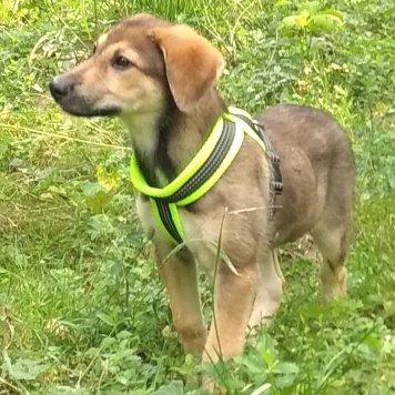 Массандра - Собаки в добрые руки