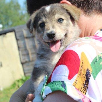 Банда щенков - Собаки в добрые руки