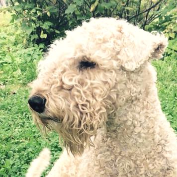 Архип - Собаки в добрые руки