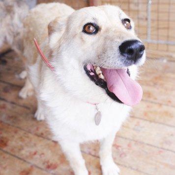 Капитолина - Собаки в добрые руки